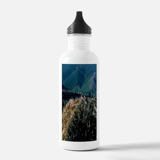 Dead trees Water Bottle