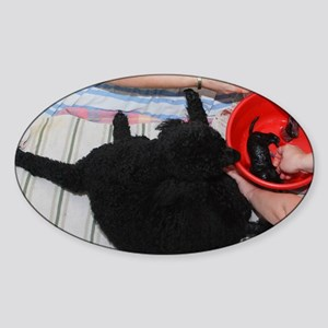 Female Poodle gives birth Sticker (Oval)