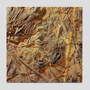 Crinoid fossils Tile Coaster