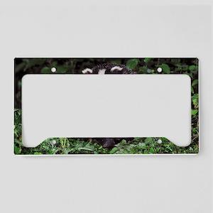 European badger License Plate Holder