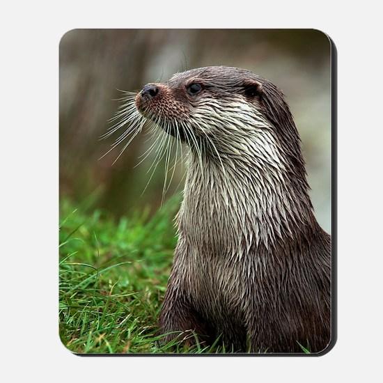 European otter Mousepad