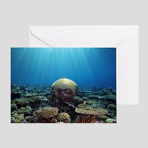 Coral garden Greeting Card