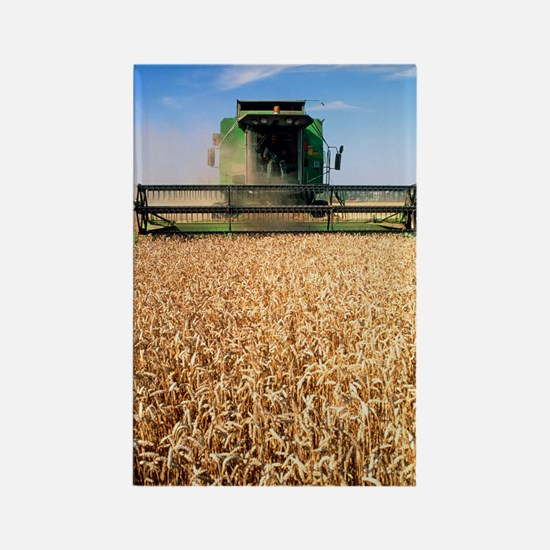 Combine harvester working in a wh Rectangle Magnet