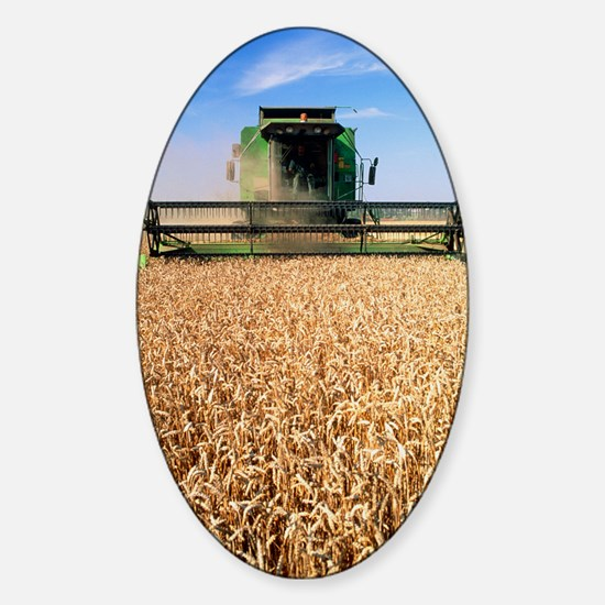 Combine harvester working in a whea Sticker (Oval)