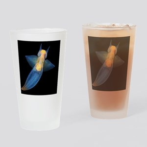 Common clione Drinking Glass
