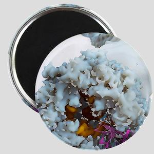 Ebola virus, molecular model Magnet