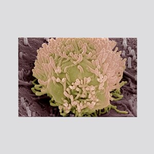 Colorectal cancer cell Rectangle Magnet