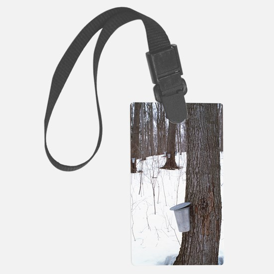 Collecting maple tree sap Luggage Tag
