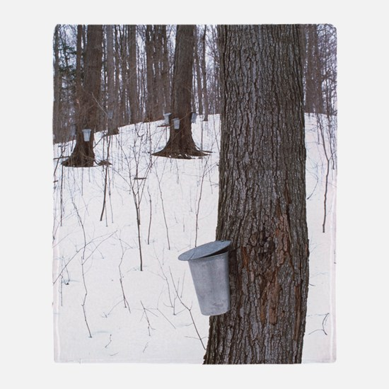 Collecting maple tree sap Throw Blanket
