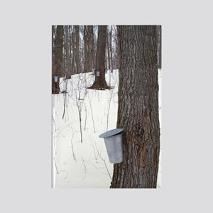 Collecting maple tree sap Rectangle Magnet