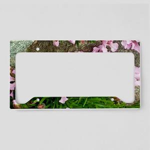 Dwarf Soapwort (Saponaria pum License Plate Holder