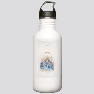 Dissected dogfish Stainless Water Bottle 1.0L