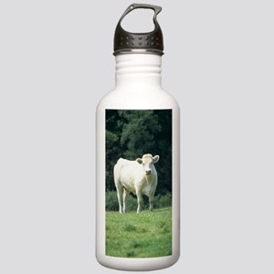 Charolais cow Stainless Water Bottle 1.0L