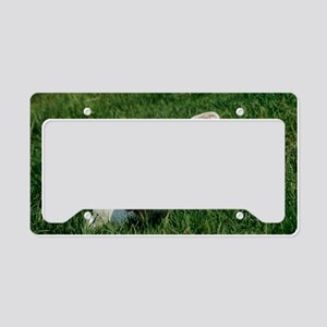 Charolais calf License Plate Holder