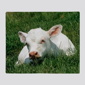 Charolais calf Throw Blanket