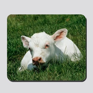 Charolais calf Mousepad
