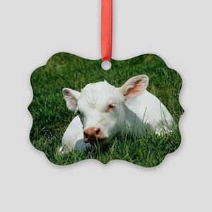 Charolais calf Picture Ornament