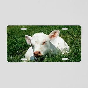 Charolais calf Aluminum License Plate