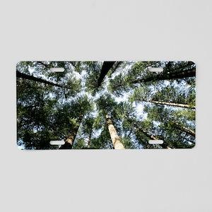 Deodar cedar (Cedrus deodar Aluminum License Plate