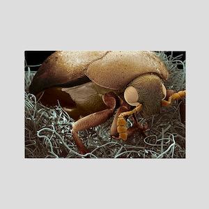 Carpet beetle Rectangle Magnet