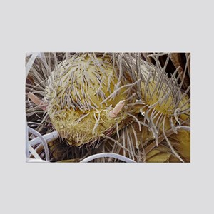 Carpet beetle larva Rectangle Magnet