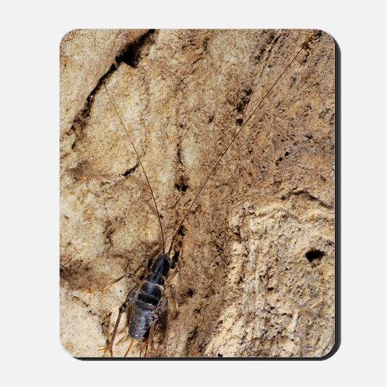 Cave cricket Mousepad