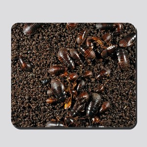 Cave cockroaches on bat guano Mousepad