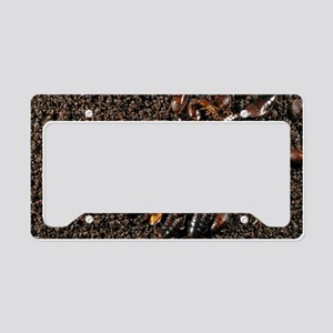 Cave cockroaches on bat guano License Plate Holder