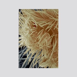 Carpet beetle larva, SEM Rectangle Magnet