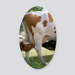 Calves suckling on their mother Oval Car Magnet