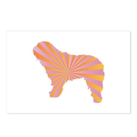 Bergamasco Rays Postcards (Package of 8)