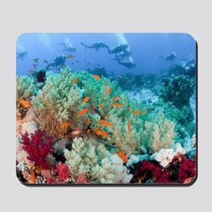 Coral Reef Red Sea, Ras Mohammed Mousepad