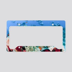 Coral Reef Red Sea, Ras Moham License Plate Holder