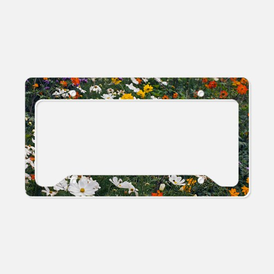 Cosmos bipinnata Sonata Serie License Plate Holder