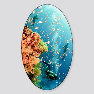 Coral Reef Red Sea, Ras Mohammed Sticker (Oval)