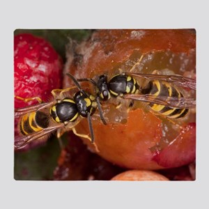 Common Wasps feeding on fruit Throw Blanket