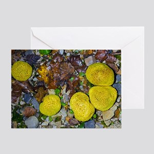 Common Earthball (Scleroderma citrin Greeting Card