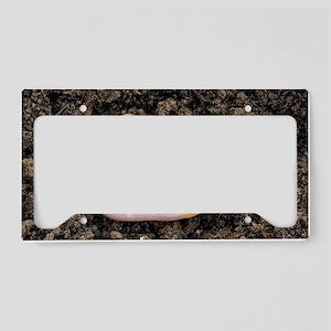 Common earthworm License Plate Holder