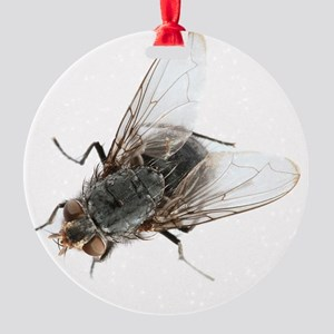 Common house fly Round Ornament