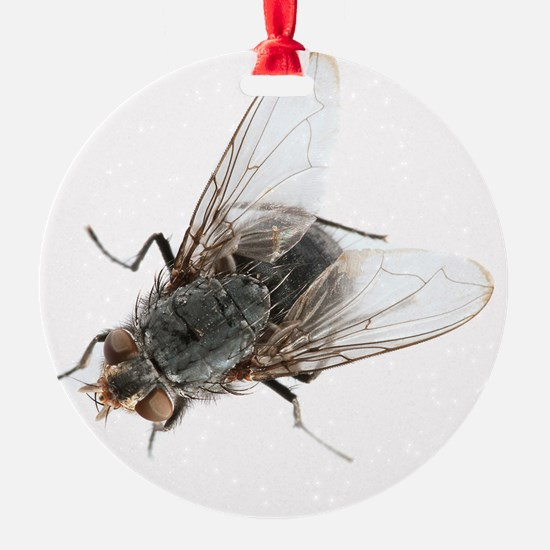 Common house fly Ornament