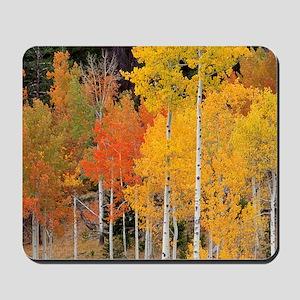 Autumn Aspen trees Mousepad