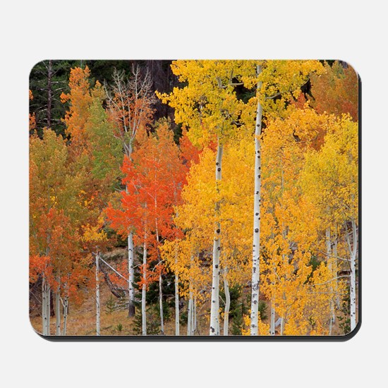 Autumn Aspen trees Mousepad