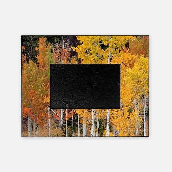 Autumn Aspen trees Picture Frame