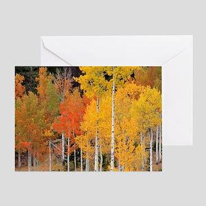 Autumn Aspen trees Greeting Card