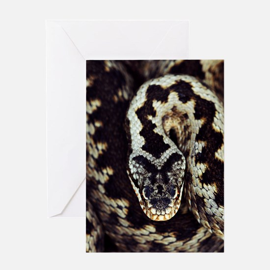Common adder Greeting Card
