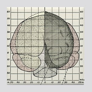 Australopithecus and gorilla brains Tile Coaster