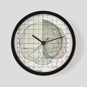 Australopithecus and gorilla brains Wall Clock