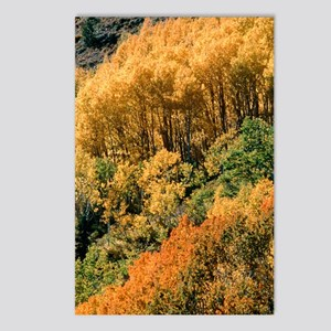 Autumn aspen trees Postcards (Package of 8)
