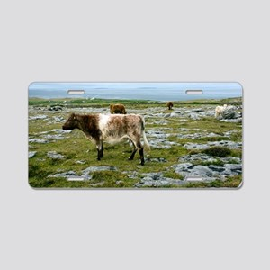 Cattle grazing in Eire Aluminum License Plate