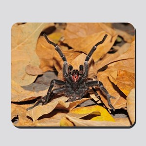 Chaetopelma olivaceum Mousepad